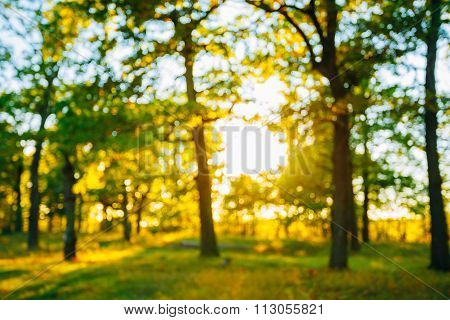 Abstract Autumn Natural Blurred Forest Bokeh Background