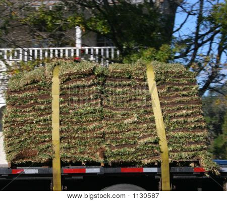 Truckload Of Sod