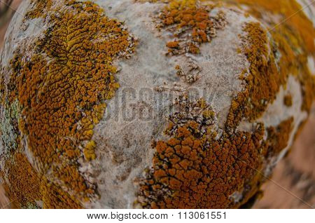 Lichen Background Fisheye