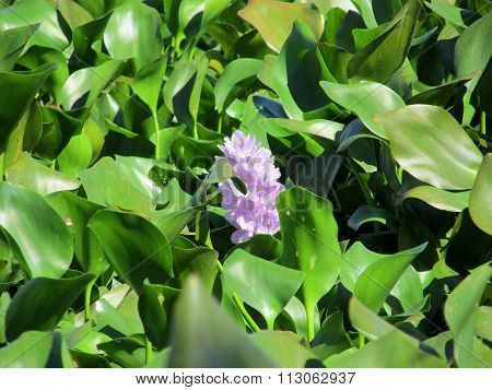 Flora Azul