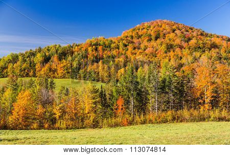 Falls Foliage In Vermont Mountain.