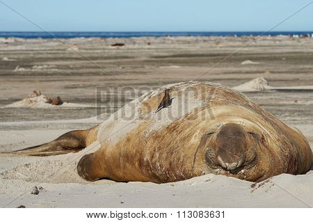 Bird on Elephant Seal