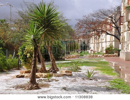 Spring in Beer-Sheva. Palm trees and hailstones