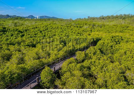 The Way Of Mangrove Forest