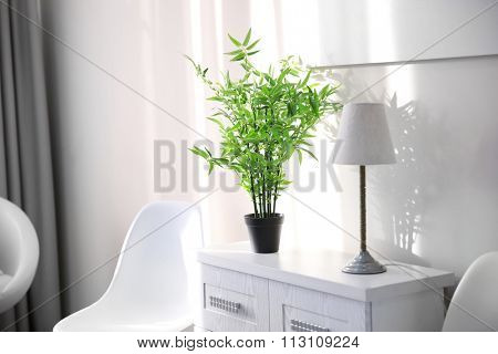 Modern chest with green plant in the room