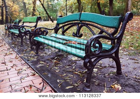 Maple leaf on a park bench