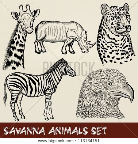Vector Set Of Hand Drawn Detailed African Animals
