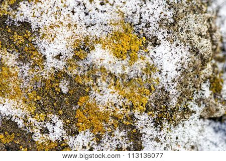 Texture Of Lichen And Snow Crystal