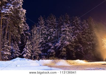 Pine Trees Covered With Snow In The Woods At Night With A Mysterious Light