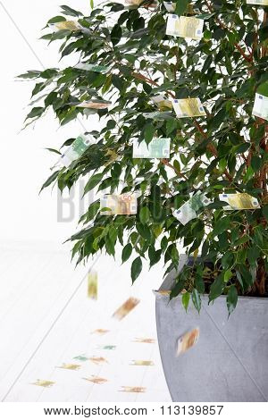 Money falling from potted plant isolated on white. Euro, business, growth.
