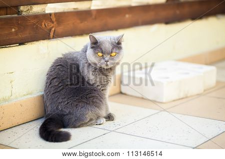 Cat With Wide Opened Orange Eyes
