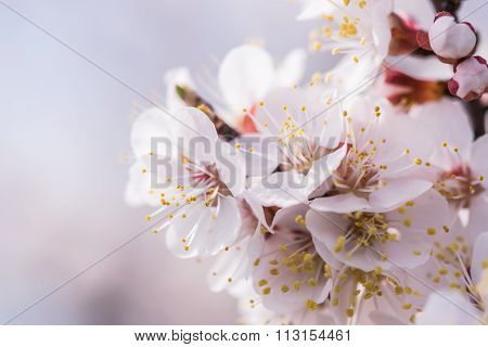 Soft Background With Flowers