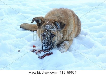 naughty puppy eating a bone