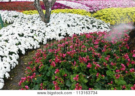 Blooming Flower At The Flowerbed