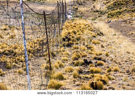 wire fence in a pasture vicunas