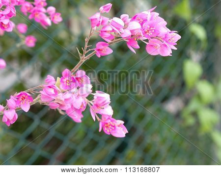 Pink Flowers ,  Flowers Along The Wayside
