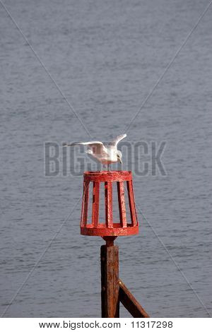 A Seagull Landing On A Perch