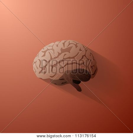 An illustration of the human brain