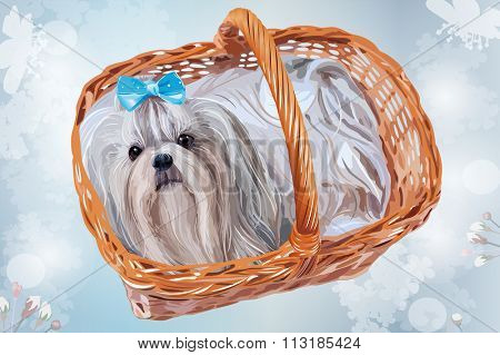 Cute shih tzu dog with blue bow sitting in basket. Floral soft blue background.