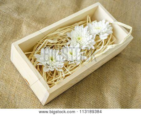 White Chrysanthemums In Wood Box