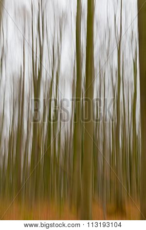 A Slow Shutter Speed Coloured Photo Of Trees In A Forest Showing Green And Orange Leaves