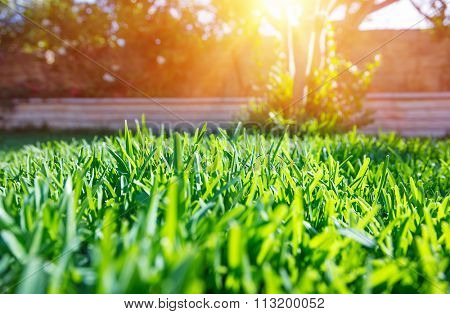 Beautiful view on cute backyard in sunny day, fresh green grass lawn in sunlight, landscaping in the