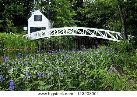 Flowers Around Foot Bridge In Acadia