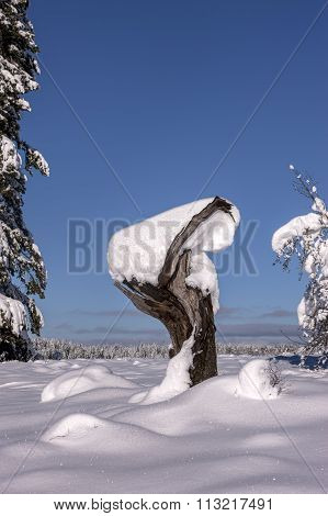 Snow Covered Tree Stump.