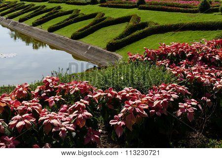 Flowerbed Beside The Pond