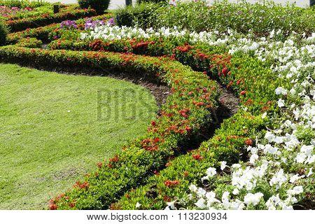 Blooming Flower In Flowerbed
