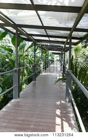 Walkway In The Park