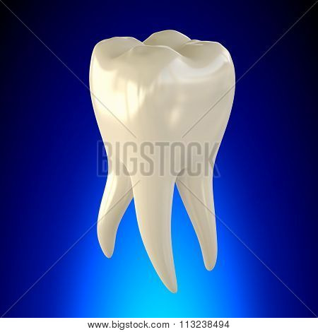 Tooth Molar Healthy