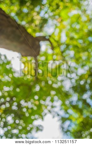 Blur Image Of Abstract Bokeh Of Tree Green Color Background