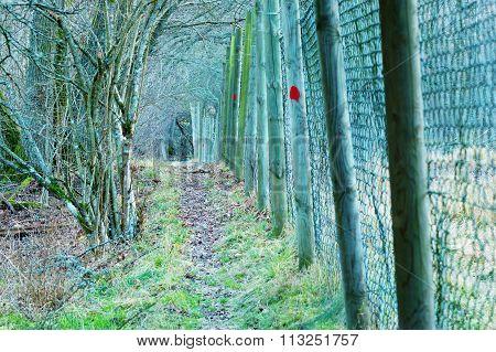 Path Outside A Fence