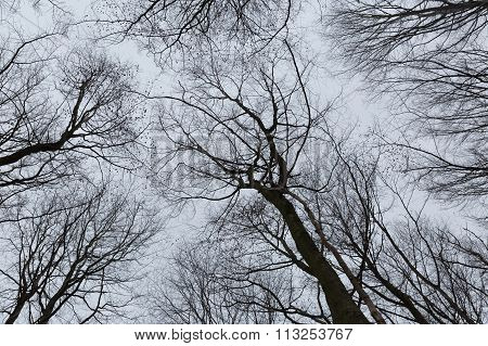 A Photo Of Trees In A Forest With A Perspective Of Looking Up Into The Sky And Isolate To See Only T