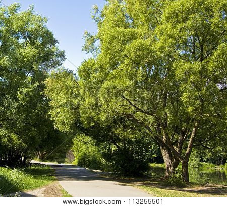 Summer landscape - road willow trees near lake in park. Recorded in Izmaylovskiy park in Moscow.