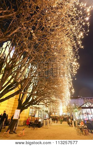 Illuminated Trees In Zagreb