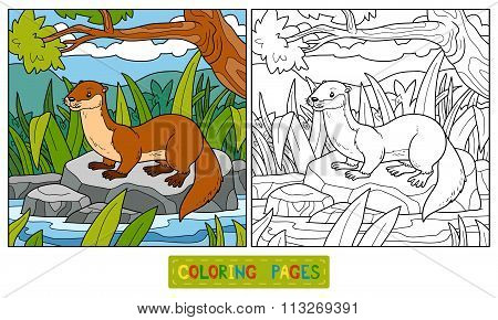 Coloring Book (otter And Background)