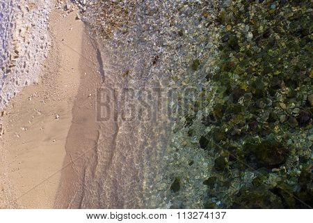Green Algae Covering Sea Bottom