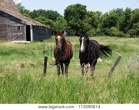 Two Horses in an abandoned farm yard