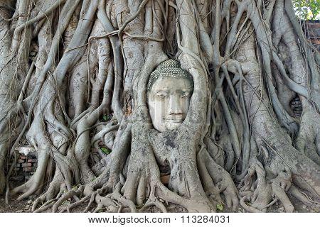 Buddha Head In Tree Root, Ayutthaya