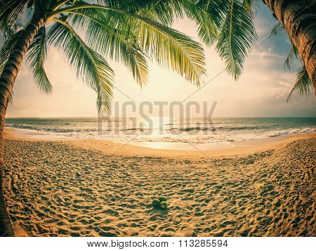 tropical beach with coconut palm. Koh Samui, Thailand Lamai Beach