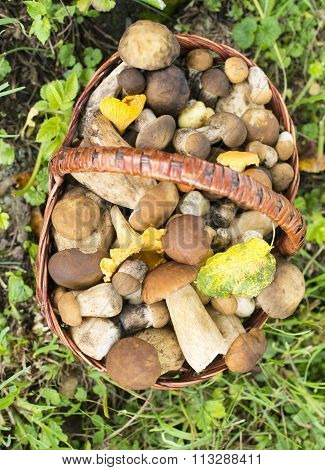 Porcini And Chanterelles In The Wicker Basket