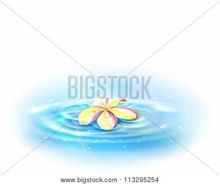 Flower In The Water. Vector Illustration, Eps10.