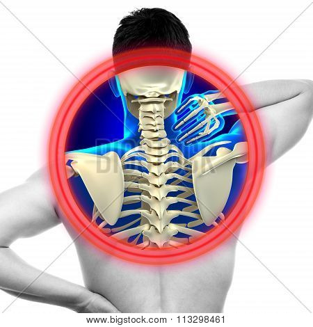 Neck Pain Cervical Spine Isolated On White - Real Anatomy Concept
