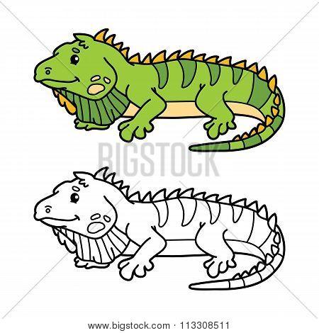 funny iguana.
