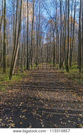 Deserted Alley In Forest Park