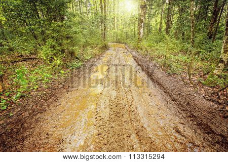 Dirty Road In The Forest.