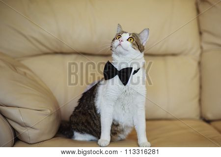 Cat Wearing Grooms Black Bow Tie At The Wedding