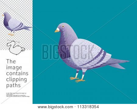 The illustration of a pigeon. A part of Dodo collection - a set of educational cards for children. The image has clipping paths and you can cut the image from the background.